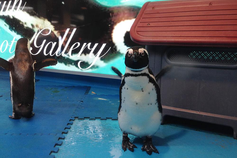 いた!ペンギン!!