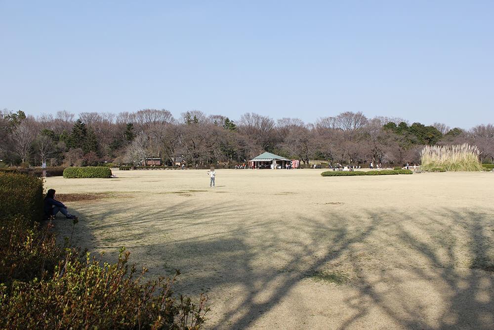 かなり広い芝生の広場