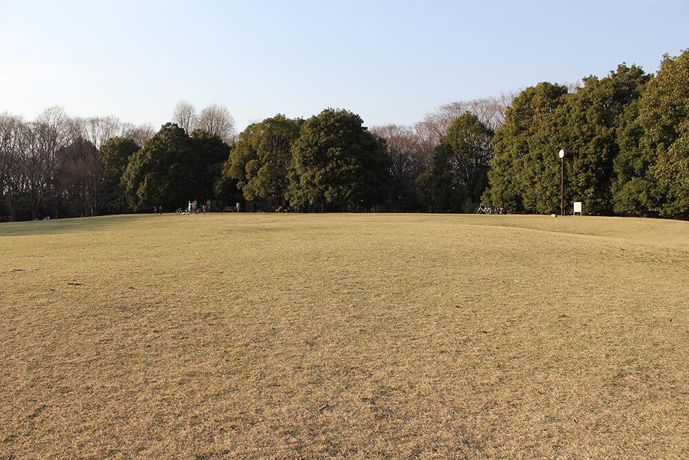 とにかく広い芝生!