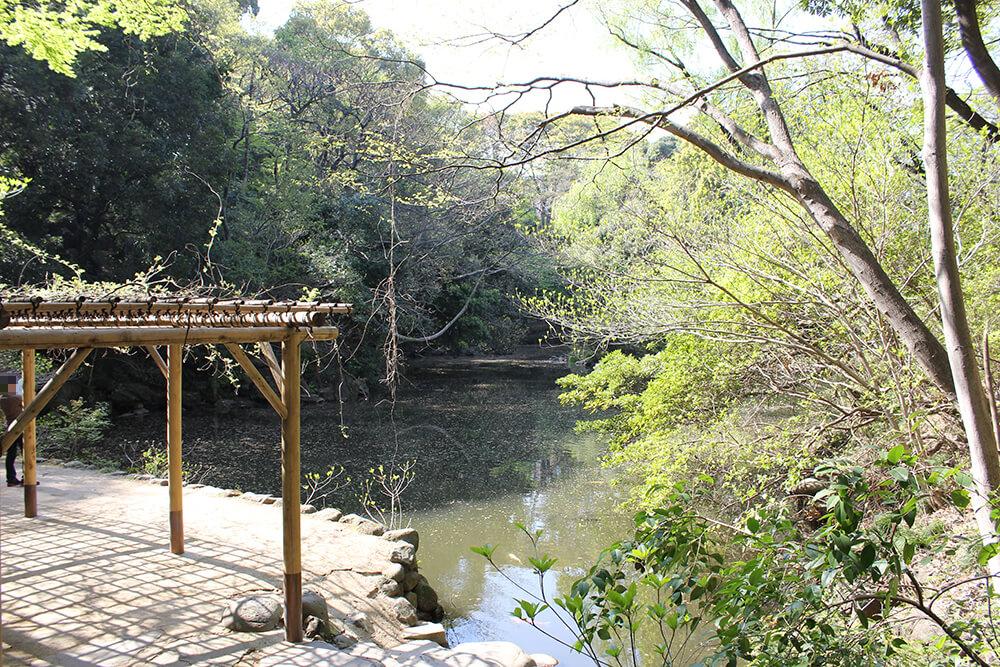 自然豊かな 「三四郎池」